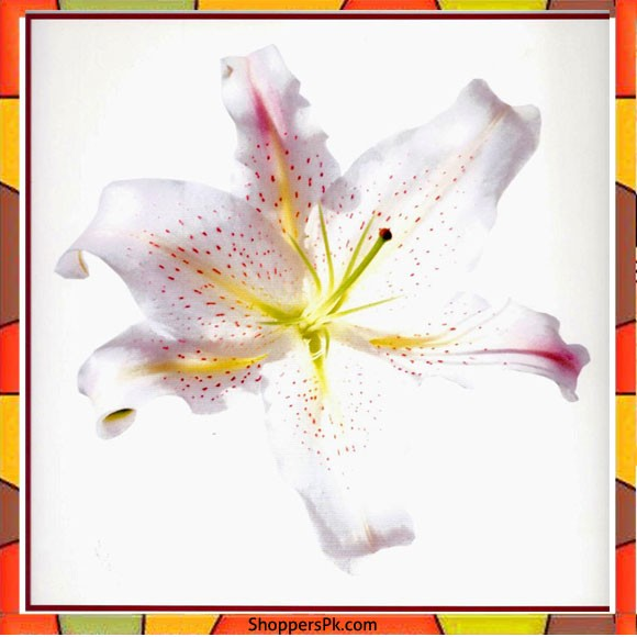 Flower Painting Print with Frame 17 - 12x12 Inch