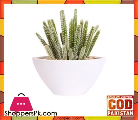 The Florist Dessert Cactus Arrangement with White Melamine Pot - FL53
