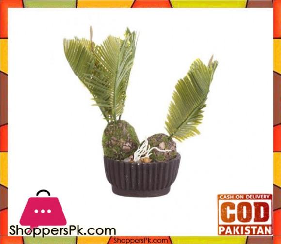 The Florist Medium Kangi Cactus with Brown Pot - FL64