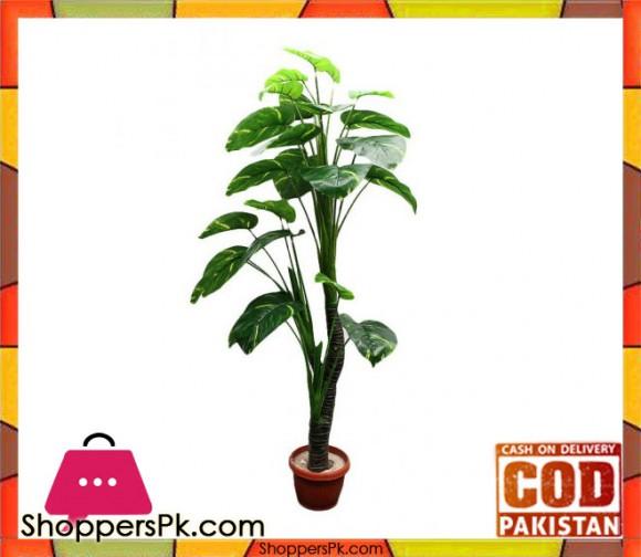 The Florist FLOR12 - Begonia Zebra Plant Pot