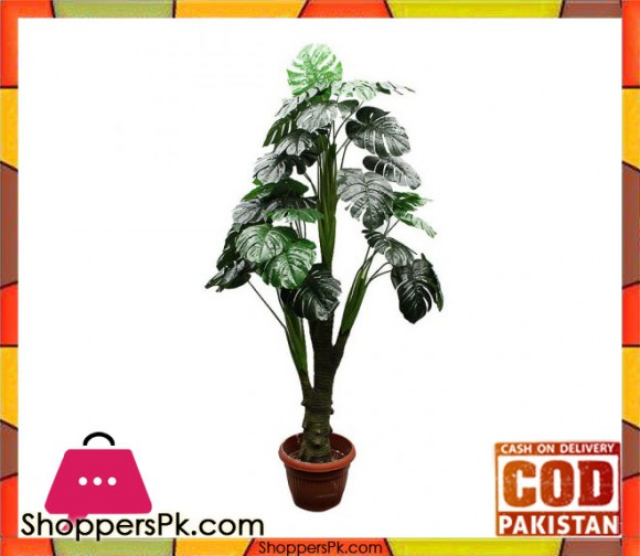 The Florist Rubber Begonia Money Plant Arrangment
