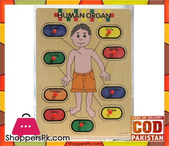 Early Educational Wooden Puzzle Toy Human Organ