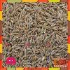 White Cumin Seed - 1 Kg
